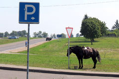 Pferdetransport Lizenzfreies Stockbild