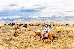Pferdetrekker- und -yakherden mit Nomaden in den Hochländern von Sichuan lizenzfreies stockbild