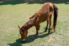 Pferdetri Beine Stockfotos