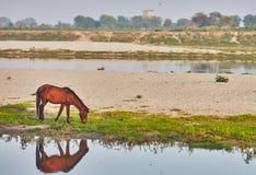 Pferdetrinken Lizenzfreie Stockbilder