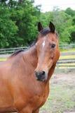 Pferdevertikales Format Lizenzfreie Stockbilder