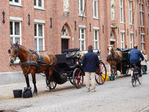 Pferdewagen in Brügge Stockbild