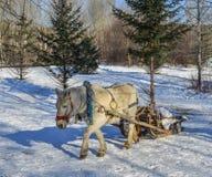 Pferdewagen, der auf Schneestraße läuft stockfoto
