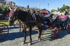 Pferdewagen für Touristen in Rom, Italien Stockfoto