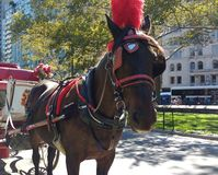 Pferdewagen-Fahrten im Central Park, NYC, NY, USA Stockbilder