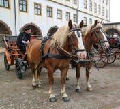 Pferdewagen mit dem Kutscher Lizenzfreie Stockbilder