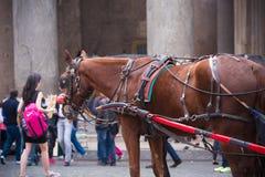 Pferdewagen in Rom Lizenzfreie Stockfotografie
