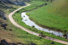 Pferdewarenkorb, der eine alte Straße nahe einem Nebenfluss weitergeht Lizenzfreies Stockbild