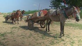 Pferdewarenkorb, Kambodscha, Südostasien stock video