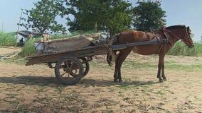 Pferdewarenkorb, Kambodscha, Südostasien stock footage