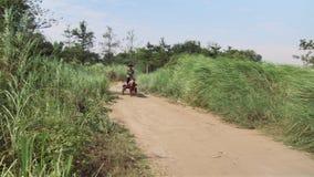 Pferdewarenkorb, Landschaft, Kambodscha stock footage