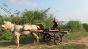 Pferdewarenkorb, Landschaft, Kambodscha, Südostasien stock footage