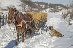 Pferdewarenkorb mit Ballen Heu im Winter Lizenzfreie Stockfotografie