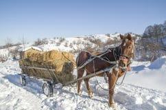 Pferdewarenkorb mit Ballen Heu im Winter Lizenzfreie Stockfotos