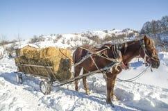 Pferdewarenkorb mit Ballen Heu im Winter Stockfotografie