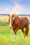 Pferdeweg in der Wiese Lizenzfreie Stockbilder