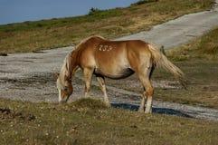 Pferdeweide durch Beklemeto-Bereich Lizenzfreie Stockfotos