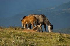 Pferdeweide durch Beklemeto-Bereich Lizenzfreies Stockbild