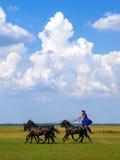Pferdezeigung im ungarischen puszta lizenzfreie stockbilder