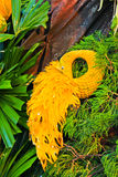 Påfågel från frukt och grönsaken Royaltyfria Foton