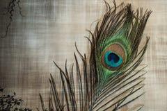 Påfågelfjäder på texturerad bakgrund Royaltyfri Foto