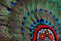 Påfågelfjädrar Royaltyfria Bilder