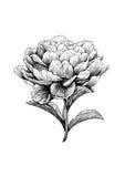 Pfingstrose, Blume, Stich, Zeichnung, Vektor, Illustration Stockbilder