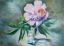 Pfingstrose im Vase Lizenzfreies Stockbild