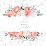 Pfingstrose, stieg, Ranunculus, rosa Blumen und dekorative eucaliptus Blattvektordesignkarte lizenzfreie abbildung