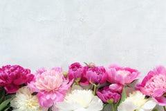 Pfingstrosen auf Steinhintergrund-Blumenkarte Lizenzfreies Stockfoto