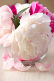 Pfingstrosenblume Stockbild