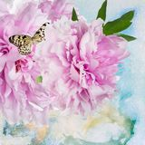 Pfingstrosenblumen mit Schmetterling Lizenzfreie Stockfotografie