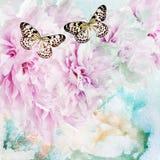 Pfingstrosenblumen mit Schmetterling Lizenzfreies Stockbild