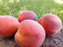Pfirsich auf dem Gras Lizenzfreies Stockfoto