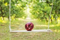 Pfirsich auf hölzernem Schwingen Stockfotografie