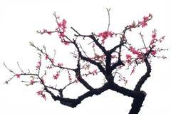 Pfirsich-Blüte Lizenzfreies Stockbild