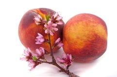 Pfirsich-Blüte und Frucht Stockfoto