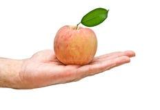 Pfirsich in der Hand als Geschenk Lizenzfreie Stockfotos