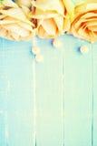 Pfirsich farbige Rose stockbilder