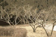 Pfirsichbaumstühle Lizenzfreies Stockbild