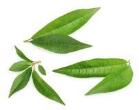 Pfirsichblätter lokalisiert auf weißem Hintergrund Stockfotos