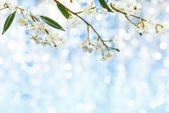 Pfirsichblüte auf hellblauem abstraktem Hintergrund lizenzfreie stockfotos