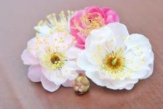 Pfirsichblüten und -knospe Lizenzfreies Stockbild