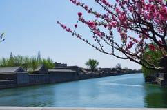 Pfirsichblütenblumen sind alle neben dem Burggraben offen Lizenzfreie Stockfotos