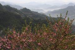 Pfirsichblumenblüte in den chinesischen Bergen Lizenzfreies Stockbild