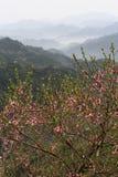 Pfirsichblumenblüte in den chinesischen Bergen Lizenzfreies Stockfoto