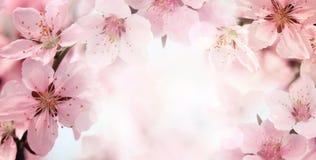 Pfirsichblumenblüte Lizenzfreie Stockfotografie