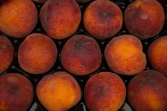 Pfirsiche auf schwarzem Hintergrund lizenzfreie stockfotos
