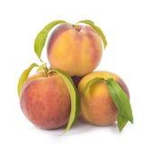 Pfirsiche mit den Blättern lokalisiert auf weißem Hintergrund Lizenzfreie Stockbilder