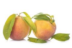 Pfirsiche mit den Blättern lokalisiert auf weißem Hintergrund Stockfoto
